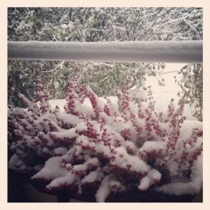 Det kom massa snö.
